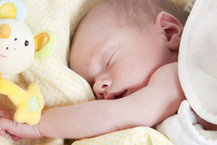 Newborn boy sleeping. Portrait of a newborn baby boy sleeping with toy Royalty Free Stock Photo