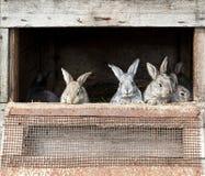 Newborn bunnies in cages Stock Photos
