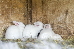 Newborn bunnies in cages Royalty Free Stock Photos