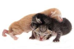 Newborn cat family Royalty Free Stock Photo