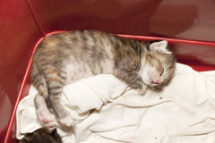 Newborn cat sleeping Stock Photo