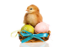 Newborn chick Stock Images