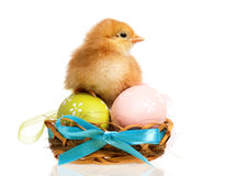 Newborn chick Royalty Free Stock Images