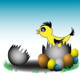 Newborn chicken Royalty Free Stock Photo