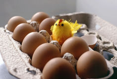 Newborn chicken. Eggs and chicken stock photography