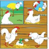 Newborn in chicken family Royalty Free Stock Photo