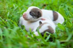 Newborn cute puppies Stock Image