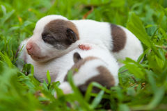 Newborn cute puppies. Group of newborn cute puppies two week old in green grass stock image
