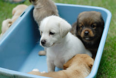 Newborn dogs. Newborn little dogs are in a plastic case Royalty Free Stock Photos