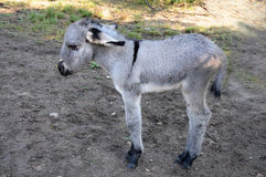 Newborn donkey Stock Photos