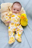 Newborn Ducky Theme Royalty Free Stock Photography