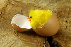 Newborn easter chick on tree trunk Royalty Free Stock Image