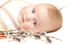 Newborn european baby girl boy with pussy willow 3 months old Stock Photos