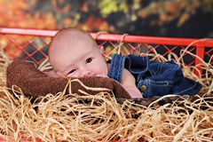 Newborn in the Fall Royalty Free Stock Image