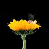Newborn on flower Stock Photo