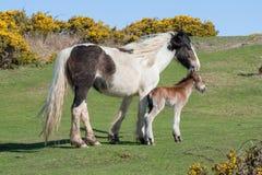 Newborn foal Stock Images