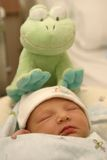 Newborn with Froggy Stock Images