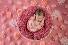 Newborn Girl Sleeping in Wire Basket. Nine day old newborn baby girl sleeping in a wire basket. Shot in the studio on a pink background that`s been strewn with Royalty Free Stock Photography