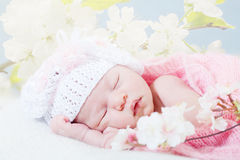 Newborn girl sleeps with spring flowers Stock Image