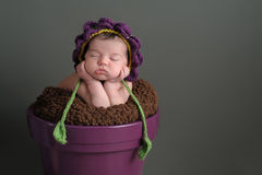 Newborn Girl Wearing a Flower Bonnet. A two week old newborn baby girl sleeping in a purple flower pot. She is wearing a crocheted flower bonnet. Shot in the Stock Photos