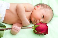 Newborn holding rose Stock Image