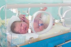 Newborn in incubator Stock Photography