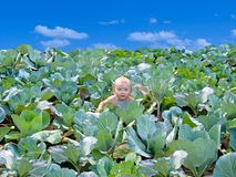 The newborn kid found in cabbage Royalty Free Stock Photos