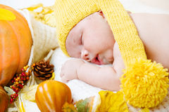 Newborn kid among pumpkins Stock Photo