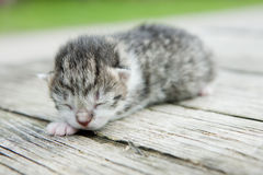 Newborn kitten. Lying and sleeping newborn kitten Stock Photos