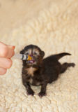 Newborn kitten Stock Photos