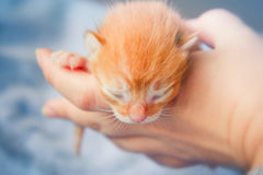 Newborn kitten Stock Photo