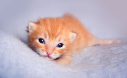 Newborn kitten Stock Photography