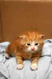 Newborn kitten Stock Images