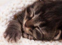 Newborn kitten. Asleep newborn kitten in a warm knitted white sweater close-up Stock Image
