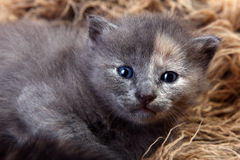 Newborn Kitten in a Basket Stock Images