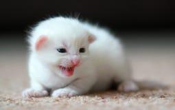 newborn-kitten-beautiful-recently-has-started-to-see-49891329.jpg