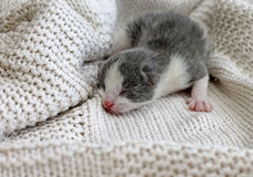 Newborn kitten crawling on knitted sweater Royalty Free Stock Photos