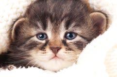 Newborn kitten Stock Photo