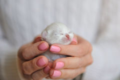 Newborn kitten with eyes closed Stock Photos