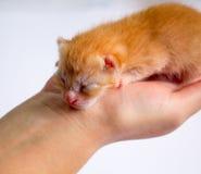 Newborn kitten in girl`s hand on white background. New born baby cat Royalty Free Stock Photos
