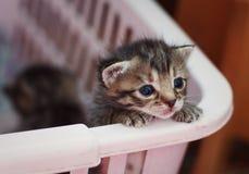 Newborn kitten Royalty Free Stock Photo