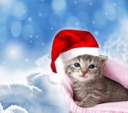 Newborn kitten with santa cap Royalty Free Stock Image