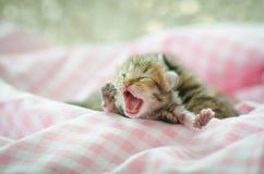 Newborn kitten sleeping Royalty Free Stock Photos