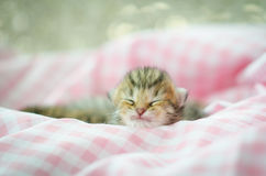 Newborn kitten sleeping Royalty Free Stock Images