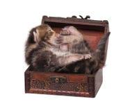 Newborn kitten Royalty Free Stock Photos