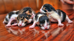 Newborn kittens Stock Photo