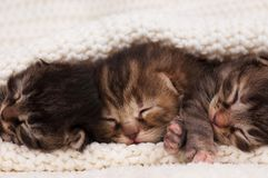 Newborn kittens Stock Image