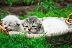 Newborn kittens Stock Photography