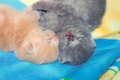 Newborn kittens Royalty Free Stock Photo