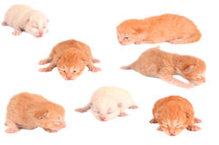 Newborn Kittens on White Stock Photos